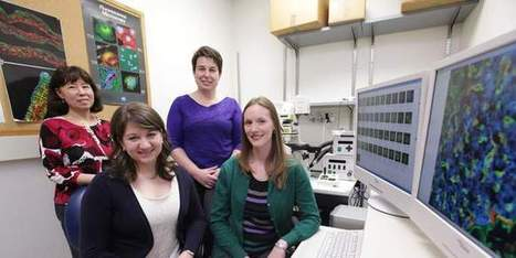 Vanderbilt diabetes researchers make cell discovery | diabetes and more | Scoop.it