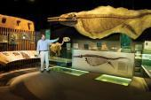 Moving the Ichthyosaur | Dinosaur gallery at New Walk | Scoop.it