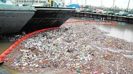 Los microplásticos se filtran a los peces a través de las branquias | Contaminación en Oceanos | Scoop.it