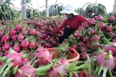 Les exportations vietnamiennes de fruits et légumes poursuivent sur leur lancée | Fruits & légumes à l'international | Scoop.it