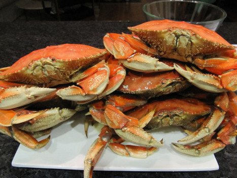 Crabby? Why, yes! | Daily Concepts | Mendocino County Living | Scoop.it