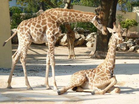 Jardim Zoológico - Blogue Educacional: Animais domésticos e selvagens! | Jardim de Infância | Scoop.it