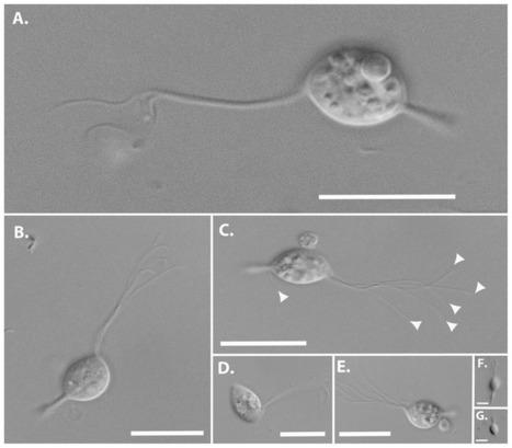 Des monstres de science-fiction... de 20 microns | Veille Scientifique Agroalimentaire - Agronomie | Scoop.it