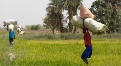 Plaidoyer pour une agriculture africaine | Questions de développement ... | Scoop.it