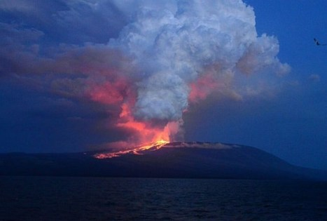 Galapagos Island Volcano Erupts, Threatens Fragile Ecosystem | News You Can Use - NO PINKSLIME | Scoop.it