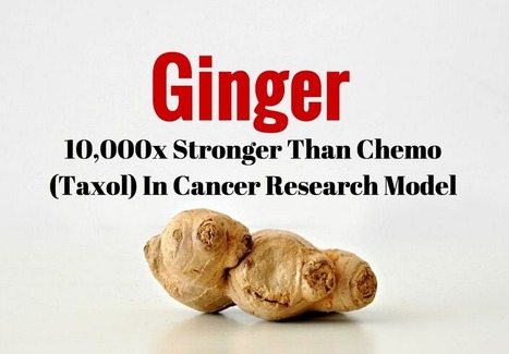 Ginger: 10,000x Stronger Than Chemo (Taxol) In Cancer Research Model | Cancer - Advances, Knowledge, Integrative & Holistic Treatments | Scoop.it