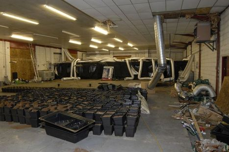 Cannabis 'addictive and causes mental health problems', 20 year study finds - Mirror.co.uk | Mental Health and Teens | Scoop.it