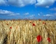 Réforme de la PAC 2014-2020, les enjeux de la politique agricole commune de demain. | agro-media.fr | Actu Boulangerie Patisserie Restauration Traiteur | Scoop.it