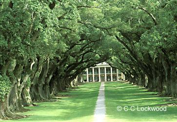 CC Lockwood | Oak Alley Plantation: Things to see! | Scoop.it