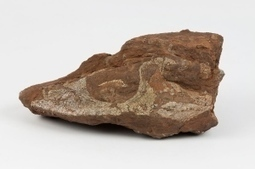 Fossils from the dawn of dinosaurs unearthed near Bay of Fundy | Nova Scotia is Awesome! | Scoop.it