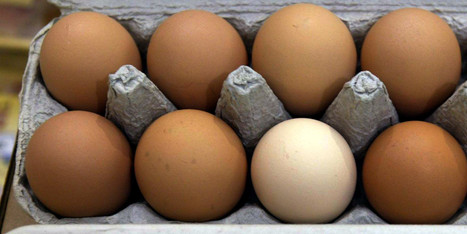 USDA: Selling Out Organic to Protect Five Factory Farms | GarryRogers Biosphere News | Scoop.it