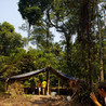 Rainforests - Global environments
