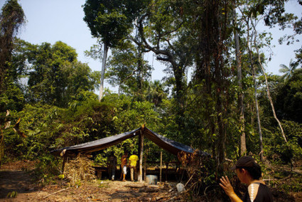 Securing A Future For The Mighty Amazon | Rainforests - Global environments | Scoop.it