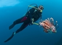 What It's Like...To Be Stung By a Lionfish | All about water, the oceans, environmental issues | Scoop.it