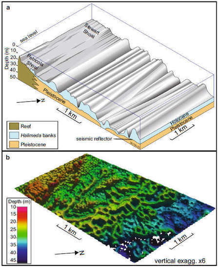 Vast Pile of Plant Skeletons Hides in the Great Barrier Reef | Conformable Contacts | Scoop.it