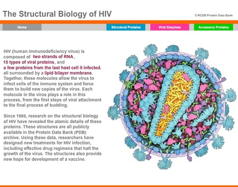 Stunning interactive model of the HIV Virus from the RCSB Protein Data Bank | Amazing Science | Scoop.it