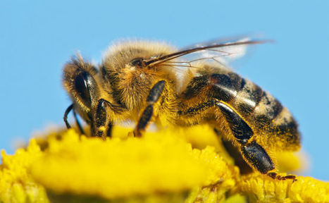 Our Garden Pest Control Could Be Harming Bees | Care2 Causes | Pest Inspection and Treatment in NC | Scoop.it