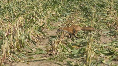 Dordogne : victimes des animaux nuisibles ? Dites-le sur Internet | Agriculture en Dordogne | Scoop.it