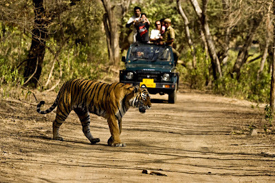 Tiger Tours India,Golden Triangle Tour with Tigers,Delhi Agra Jaipur | Tour Advisors India | Scoop.it