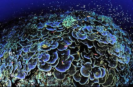 Perubahan Iklim Rusak 48% Habitat Terumbu Karang | Marine Conservation (Konservasi Laut) | Scoop.it