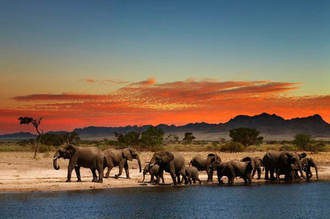 Can We Win the Ivory Wars? 4 Hopeful Signs | Human Nature ... | Nature conservation | Scoop.it