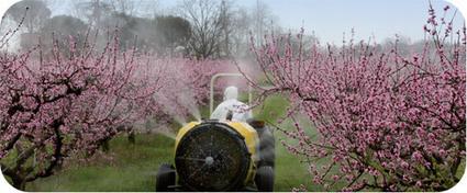 Abeille en danger et disparition abeilles - Abeille Sentinelle | Projet S.V.T : Protéger la biodiversité | Scoop.it