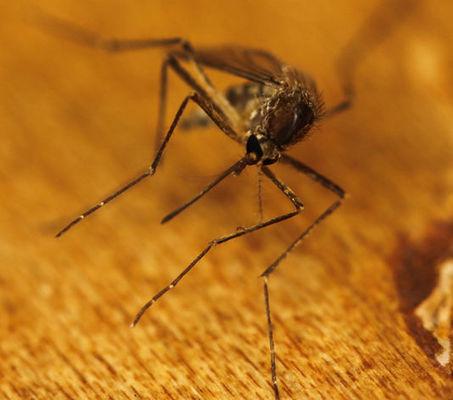 Paludisme: un nouveau traitement potentiel a été identifié | EntomoNews | Scoop.it