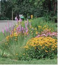 RainScapes Program | Montgomery County Department of Environmental Protection | A Gathering of Rain Gardens | Scoop.it