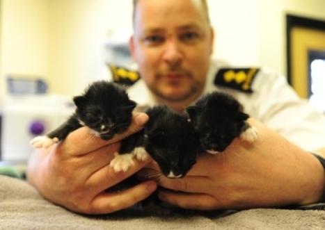 Three kittens left to die in a cardboard box - Peterborough Telegraph | Guinea Pigs Rule!!!!!!!!!!! | Scoop.it