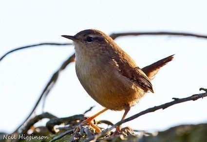 Looking After Your Garden Birds - thewildoutside.com | events in the Cotswolds | Scoop.it