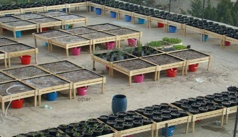 Shagara association sets up small farms and plants trees in Egypt's urban sprawl | Égypt-actus | Scoop.it