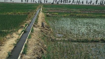Mali: Les paysans se penchent sur la commercialisation de leurs produits | Questions de développement ... | Scoop.it