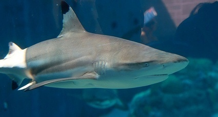 Texture of shark's skin inspires a unique approach to bacteria control for ... - MedCity News   Microbe   Scoop.it