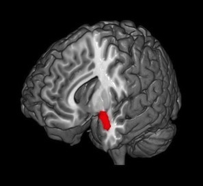 What Does Mindfulness Meditation Do to Your Brain?   Cognitive Neuroscience   Scoop.it