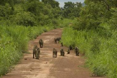 Environnement: la Fondation des savanes ouest-africaines pour une ... - Bénin Actu | ikodjoh | Scoop.it