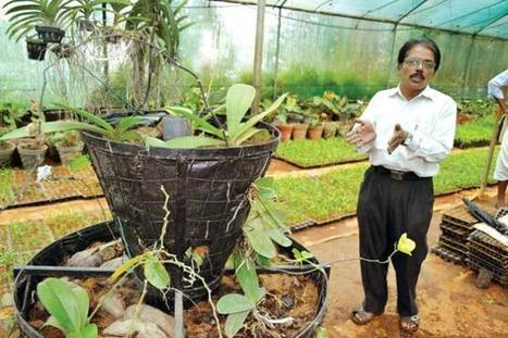 Anakkayam Agricultural Research Station (ARS) innovates in productive farming | Chukkuvellam. For Malayalis. | Scoop.it