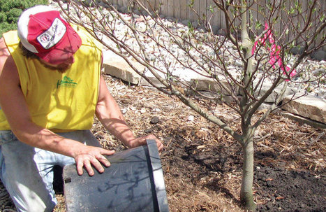 Considerations for Young, Newly-Planted Trees - Tree Services | Horticulture | Scoop.it