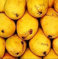 Pakistan's mango sector eyes Australian potential | Fresh Fruit Portal | Fruits & légumes à l'international | Scoop.it