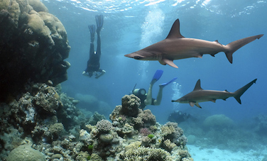 9 Reasons Why We #Need #Sharks !!! | Rescue our Ocean's & it's species from Man's Pollution! | Scoop.it