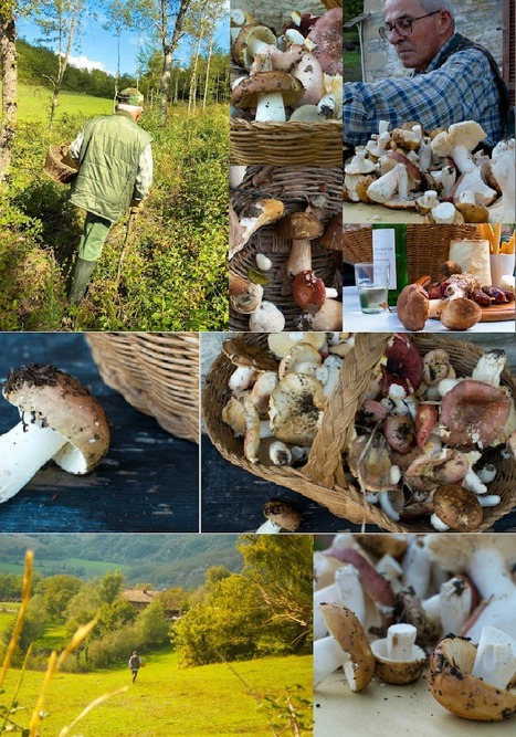Mushroom Hunting in the Hills of Le Marche + 3 Fall Funghi Recipes | Le Marche and Food | Scoop.it