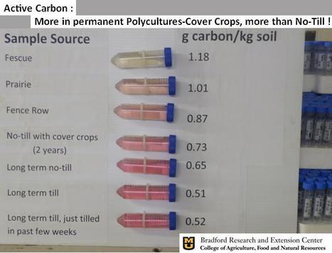 Dosage du Carbone actif du sol : plus de MO labile dans la prairie qu'en non labour avec couverts ! | MOF Matière Organique Fugace réactive du sol | Scoop.it