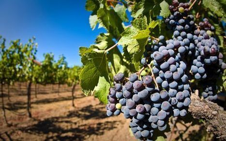 So…How About A Beer? Napa Valley is Running Out of Wine Grapes   I Heard It Through the Grapevine   Scoop.it