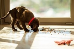 Effect of Pet on Home Insurance Policy | American Tri-Star Insurance Services | Scoop.it