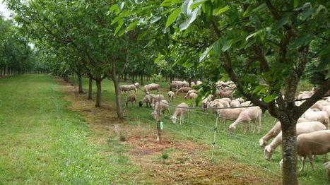 Bergers et brebis développent une agriculture pastorale en Périgord Noir | Agriculture en Dordogne | Scoop.it
