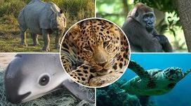 World facing biggest mass extinction since dinosaurs - with two thirds of animals wiped out in 50 years | Farming, Forests, Water, Fishing and Environment | Scoop.it
