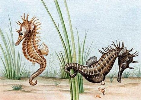 Hippocampes du Bassin d'Arcachon | Revue de Web par ClC | Scoop.it