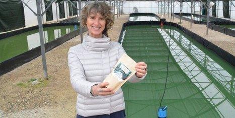 Insolite en Lot-et-Garonne : des algues dans le chocolat | Algues alimentaires | Scoop.it