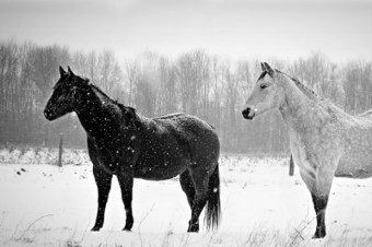 Black & White Majestic Creatures « Broken Light: A Photography ... | Photography Collective | Scoop.it