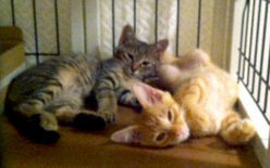 [Eng] Des chatons errants dans la zone sinistrée de Sendai adoptés à Tokyo | Kyodo News | Japon : séisme, tsunami & conséquences | Scoop.it