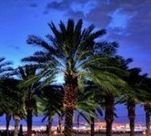 Palm Tree Service | Tree Care Services | Scoop.it